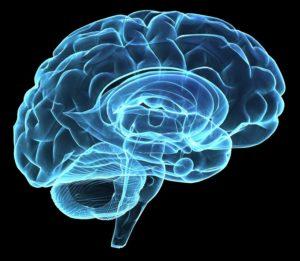 Brain Hologram