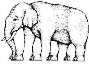 Elephant_perception