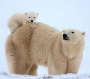 bear a bear